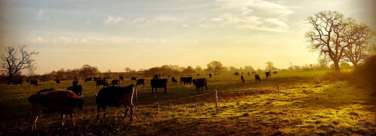 Autumn field in Cholmondeley