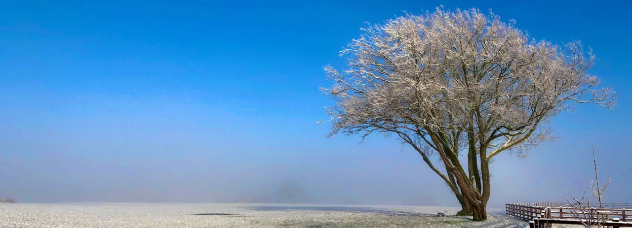 Frost covered tree in Chorley
