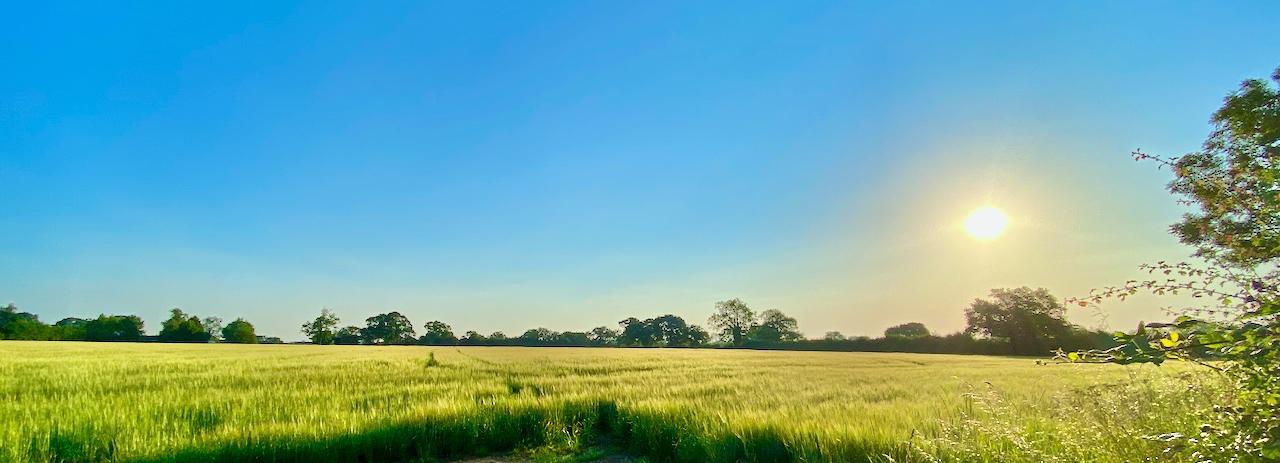 Morning field in Chorley