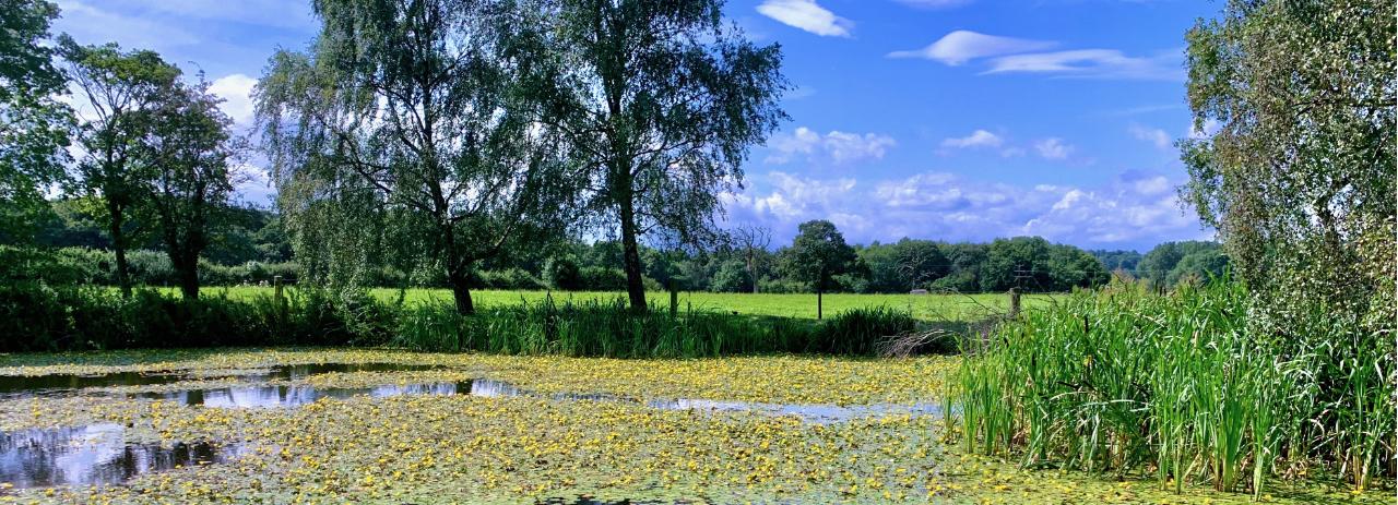 Summer pond in Cholmondeley