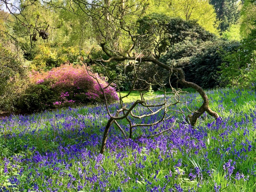 Late Spring in Cholmondeley