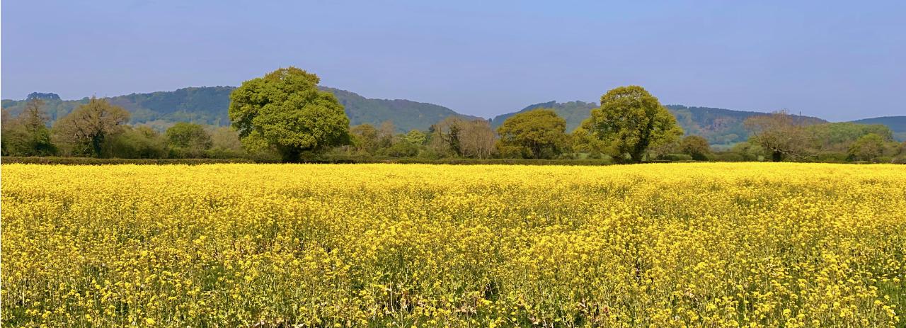 Summer field in Cholmondeley