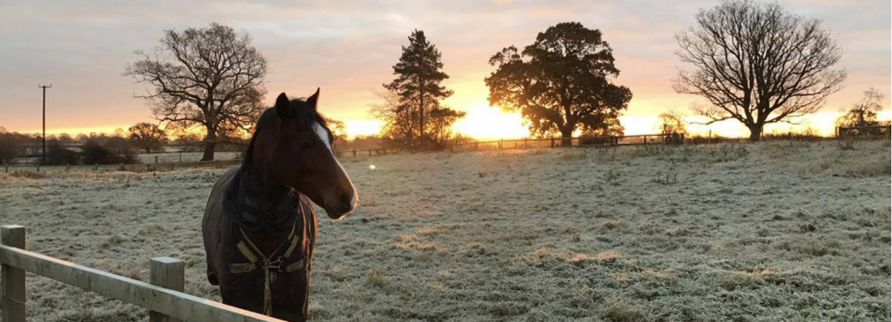 Horse and Winter Sunset